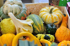 Pumpkins and squash. Royalty Free Stock Photography