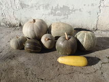 Pumpkins and a squash royalty free stock images