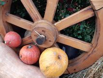 Autumn harvest. royalty free stock photography