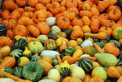 Pumpkins and squashes. Fall gourd background Stock Photography