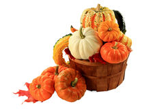 Pumpkins and squashes Fall arrangement Stock Images