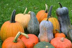 Pumpkins and squashes Royalty Free Stock Image