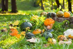 Pumpkins, squashes and gourds Stock Photos