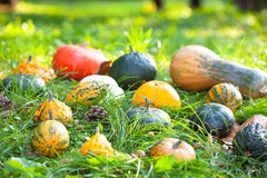 Pumpkins, squashes and gourds Stock Image