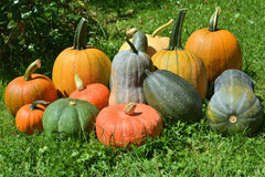 Pumpkins and squashes Royalty Free Stock Images