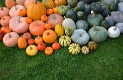 Pumpkins and squashes harvest royalty free stock photos