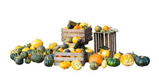 Pumpkins and squashes Royalty Free Stock Photography