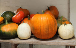Pumpkins and Squashes. Royalty Free Stock Photography