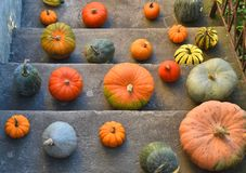 Pumpkins on the old outdoor stairs Stock Photography