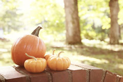 Pumpkins and squashes outside Royalty Free Stock Photo