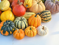 Pumpkins and squashes Stock Photos