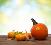Pumpkins and squashs on wooden boards Stock Photography