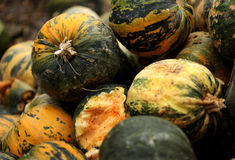 Pumpkins. Stack of ripe pumpkins in the farm Stock Photos