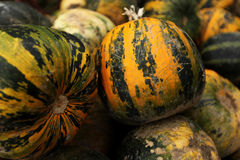 Pumpkins. Stack of ripe pumpkins in the farm Stock Photo