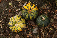 Pumpkins. Stack of ripe pumpkins in the farm Royalty Free Stock Photography