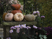 Pumpkins Stacked on Rocks Royalty Free Stock Photo