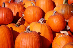Pumpkins Stacked Up royalty free stock image