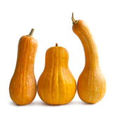 Pumpkins with stem Royalty Free Stock Photography