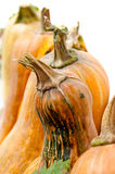 Pumpkins with stem Stock Images