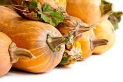 Pumpkins with stem Royalty Free Stock Photos