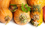 Pumpkins with stem Royalty Free Stock Image
