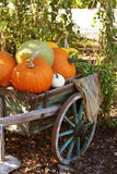 Pumpkins still-life Royalty Free Stock Photography