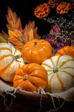 Pumpkins still life Royalty Free Stock Photo