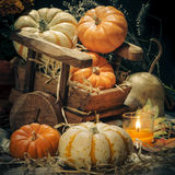 Pumpkins still life Stock Images