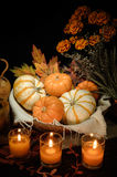 Pumpkins still life Royalty Free Stock Photos