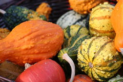 Pumpkins still-life with natural background Stock Images