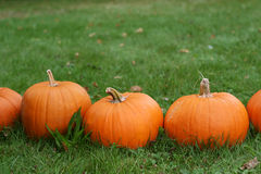 Pumpkins still-life with natural background Stock Image