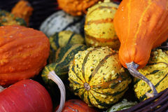 Pumpkins still-life with natural background Royalty Free Stock Image