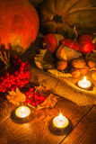 Pumpkins still life vert. Autumn pumpkins still life vertical Stock Image