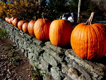 Pumpkins on stone fence. Pumpkins on a stone fence in the autumn sun Stock Photos
