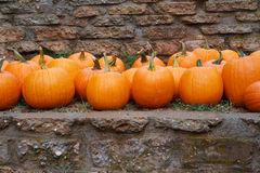 Pumpkins stone wall Stock Photography