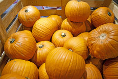 Pumpkins. Stored for winter in a wooden crate Stock Images