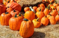 Pumpkins and Straw Royalty Free Stock Photo