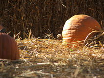 Pumpkins in the straw Royalty Free Stock Photo