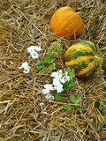 Pumpkins on straw Royalty Free Stock Photography