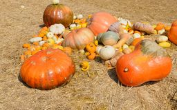 Pumpkins on straw Stock Images