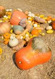 Pumpkins on straw Royalty Free Stock Photos