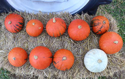 Pumpkins. 10 pumpkins on the straw Royalty Free Stock Photography