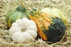 Pumpkins in the Straw Royalty Free Stock Images