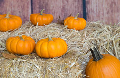 Pumpkins on Straw Bales Stock Images
