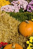 Pumpkins with Straw and Flowers Royalty Free Stock Photo