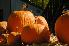 Pumpkins on straw on a sunny day Stock Photography