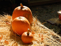 Pumpkins on straw on a sunny day Stock Images