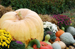 Pumpkins and Such Stock Images