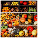 Pumpkins and summer and winter squashes Royalty Free Stock Photo