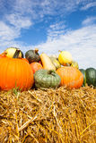 Pumpkins in the sun Royalty Free Stock Photos
